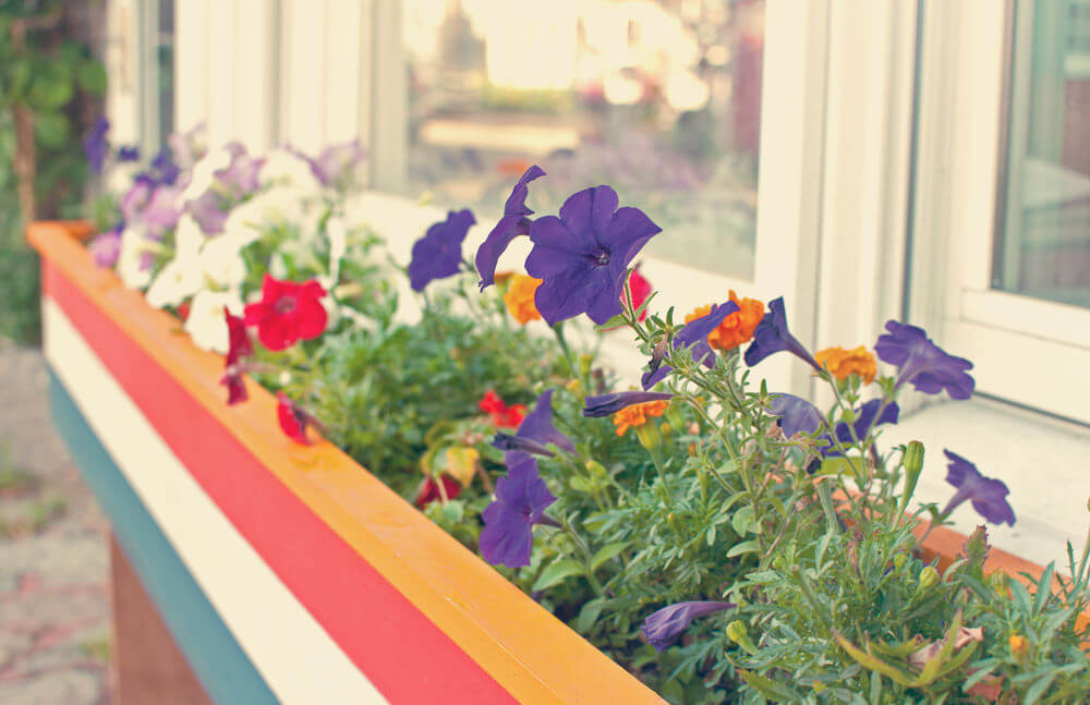 24window-flower-box