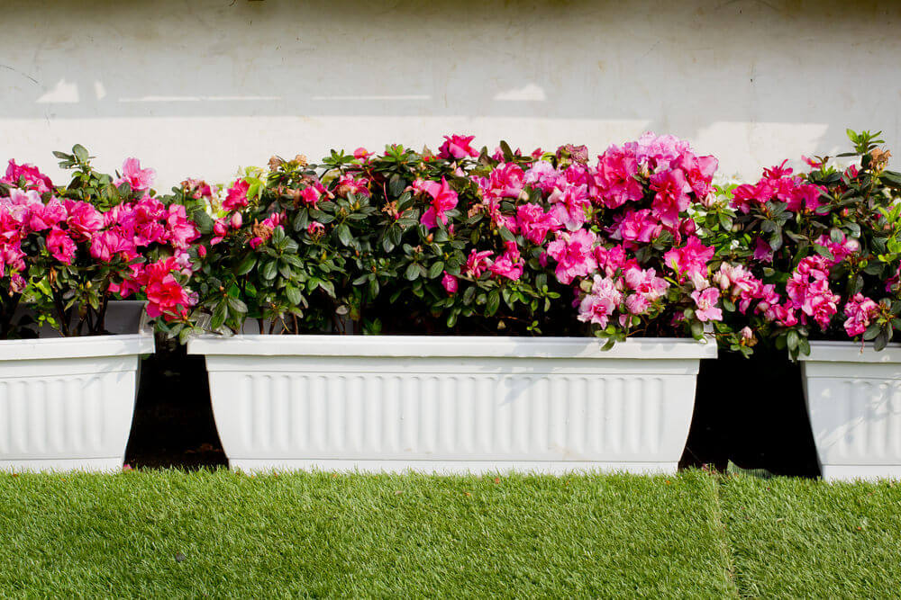 25window-flower-box