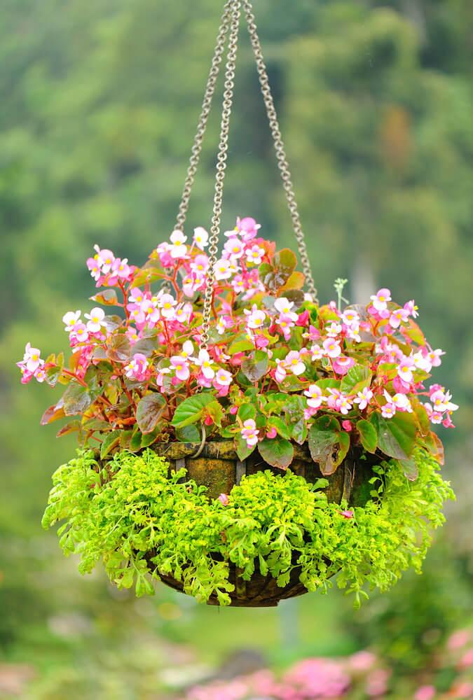 26hanging-basket-flowers