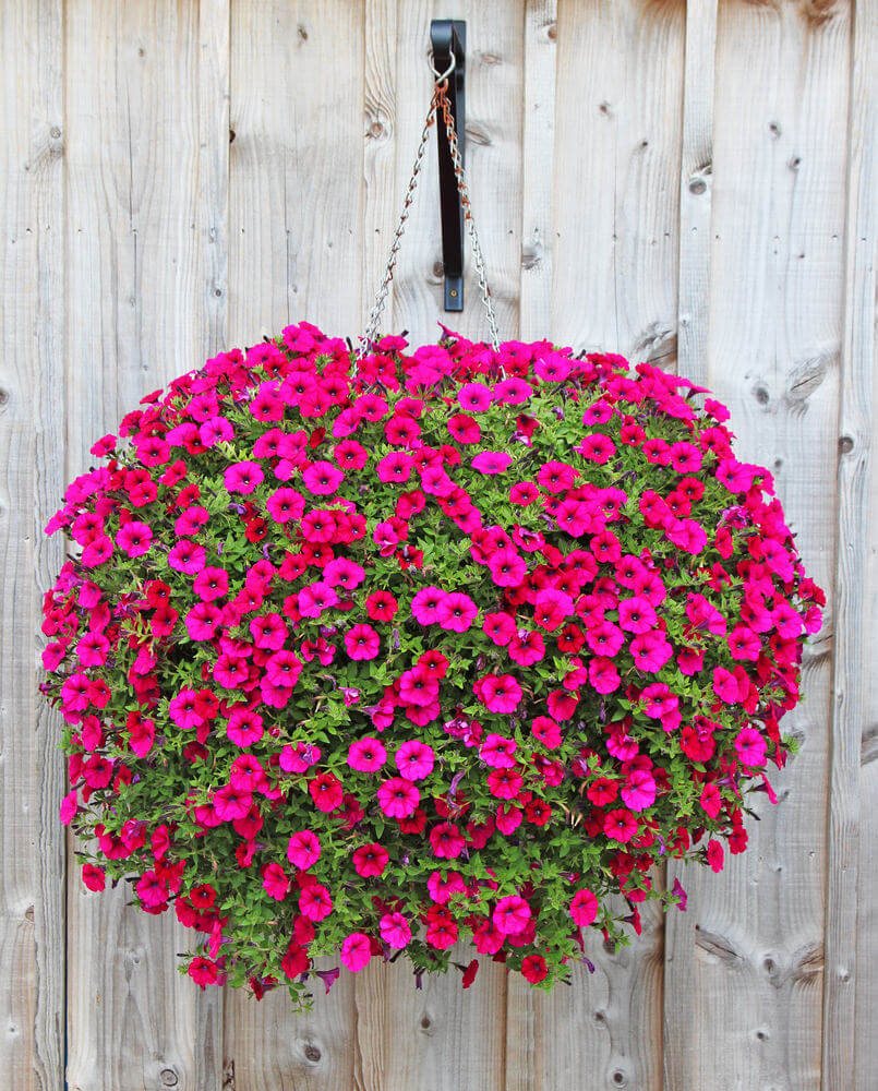 34hanging-basket-flowers