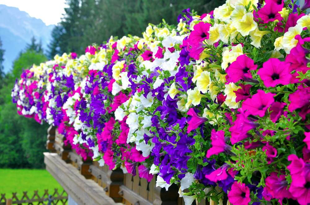 36hanging-basket-flowers