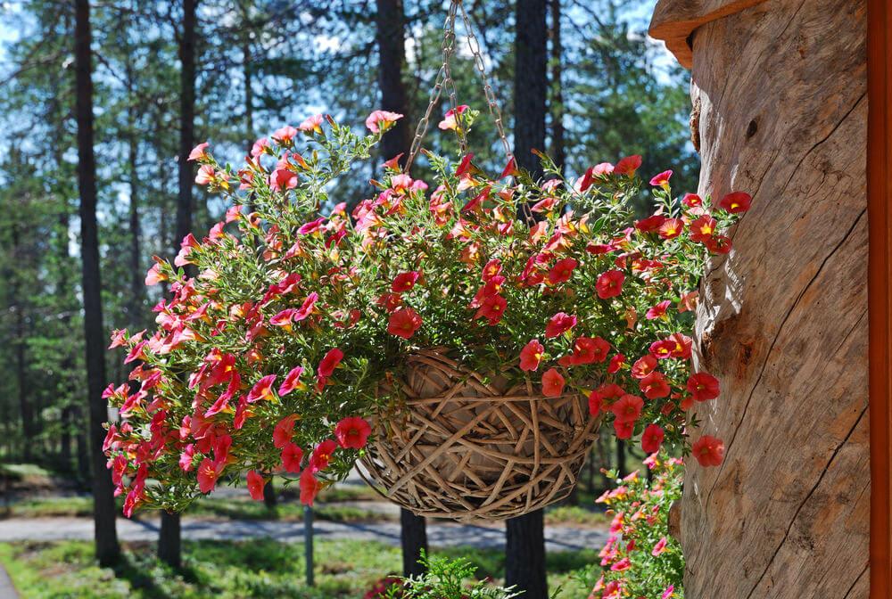 38hanging-basket-flowers