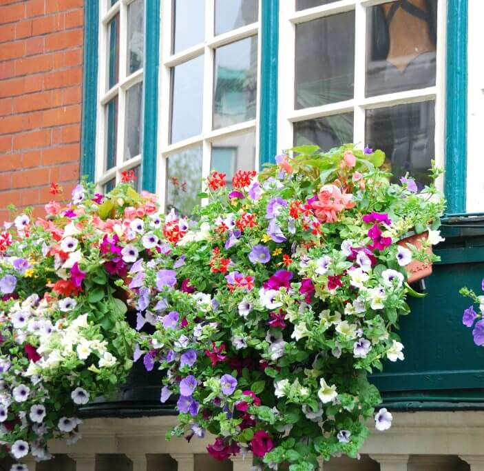 3window-flower-box
