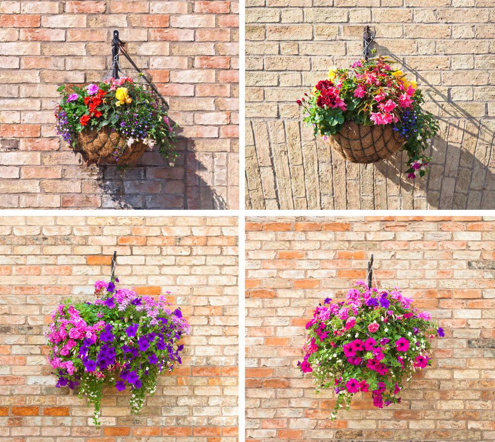 41hanging-basket-flowers