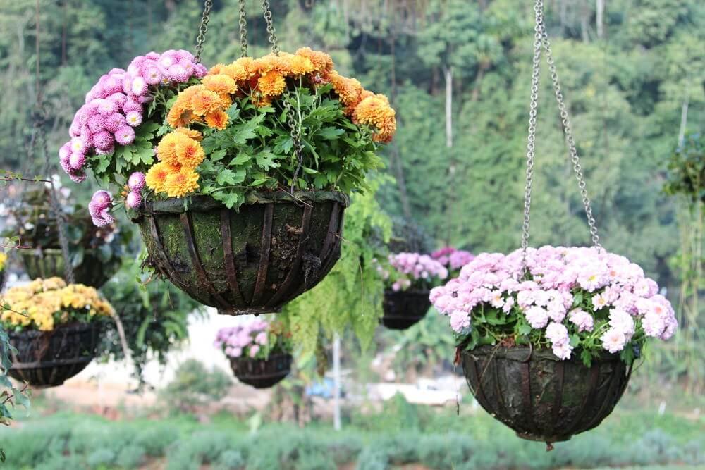 43hanging-basket-flowers