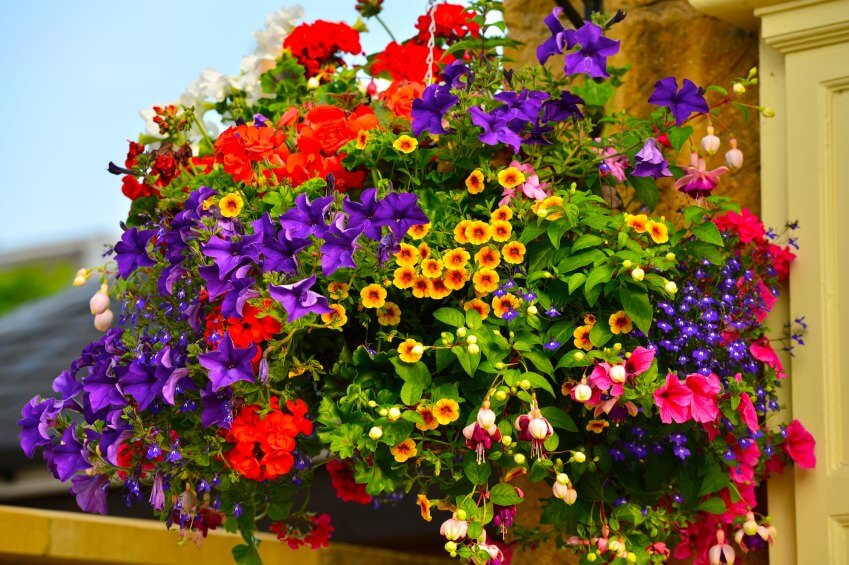 5hanging-basket-flowers