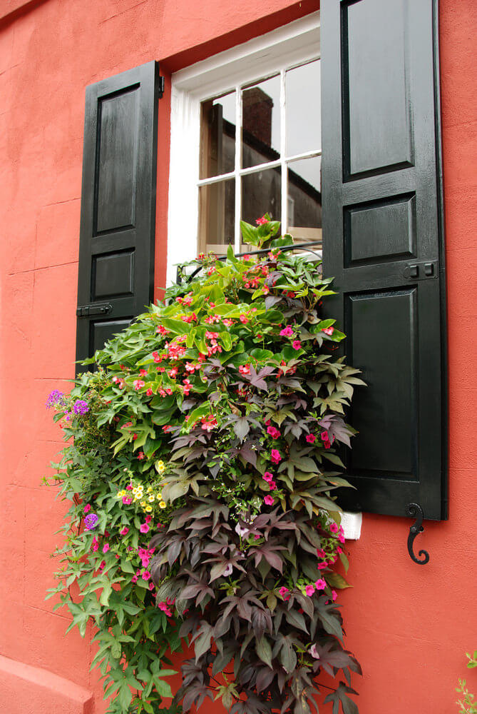 5window-flower-box