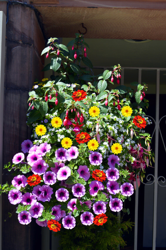 6hanging-basket-flowers