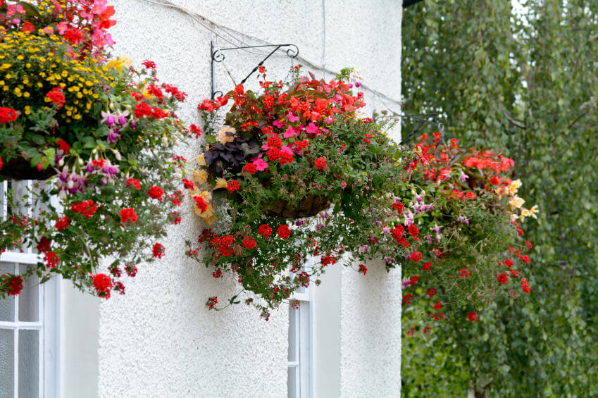 7hanging-basket-flowers