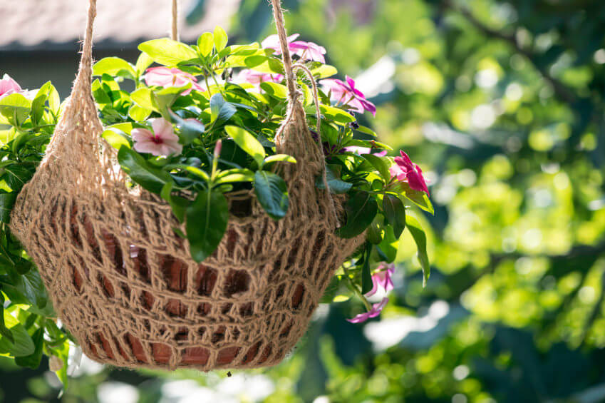 8hanging-basket-flowers