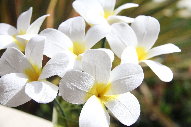 Cvetu_iz_gofrirovannoj_bumagi_73