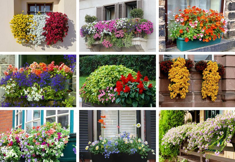 Examples-of-Flower-Boxes1