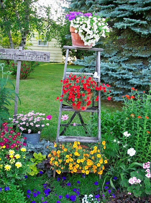 lovely-garden-design-with-rustic-old-wood-ladder-planters-also-small-colorful-flowers-and-green-grass-field
