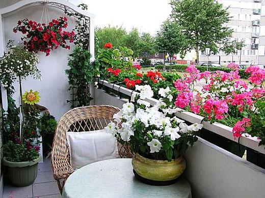 balkon-s-cvetami