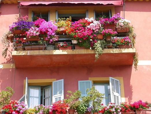 cveti-na-balkone-523x393